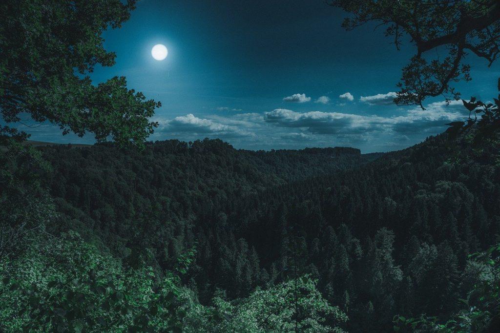nature, forest, landscape
