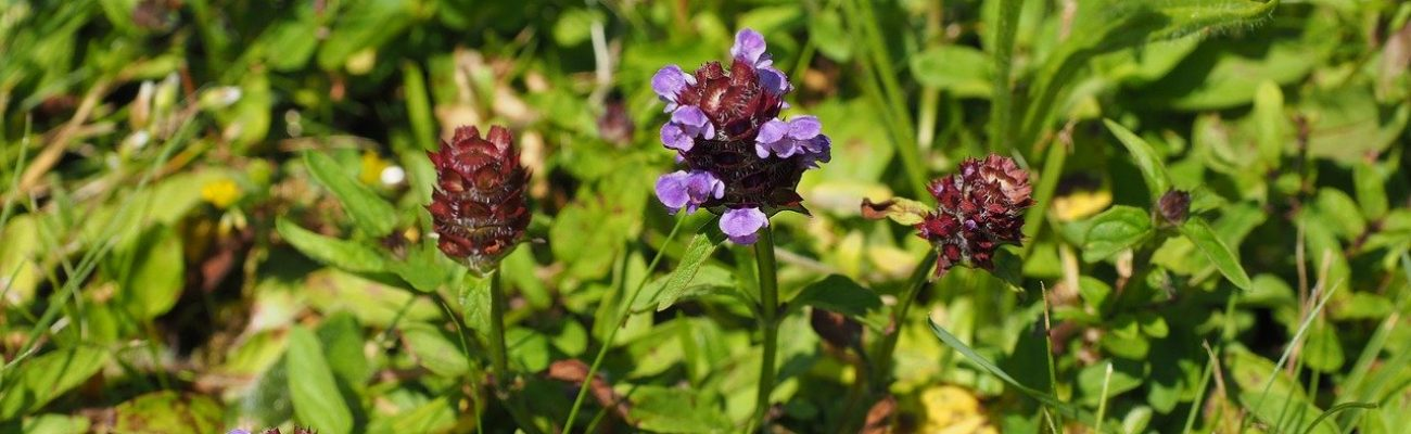 small accentor, flower, blossom